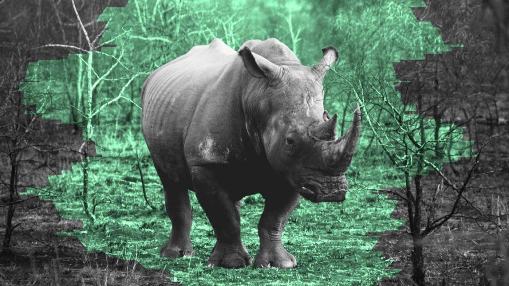 Endangered Rhino