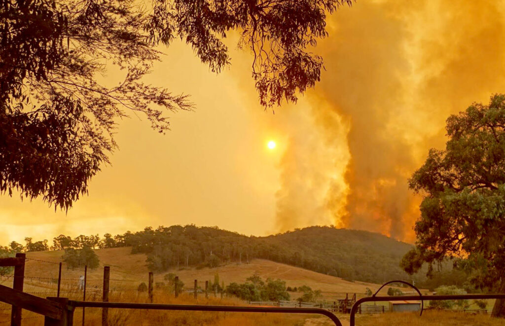 bushfire-banner